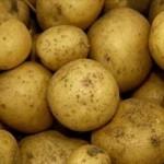 Описание сорта картофеля Фиоретта