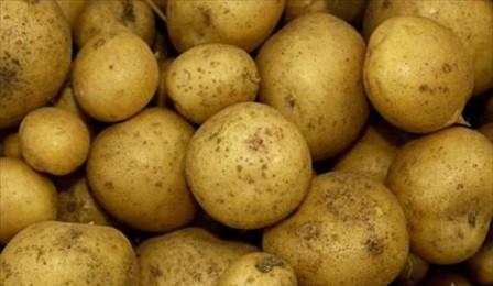 foto-sorta-kartofelya-fioretta