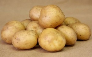 foto-sorta-kartofelya-utro