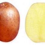 Описание сорта картофеля Якутянка