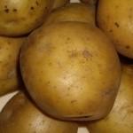 Описание сорта картофеля Ярла
