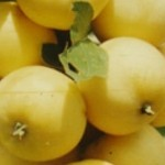 Описание сорта яблони Бердское сладкое