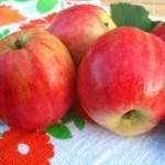 Описание сорта яблони Горнист