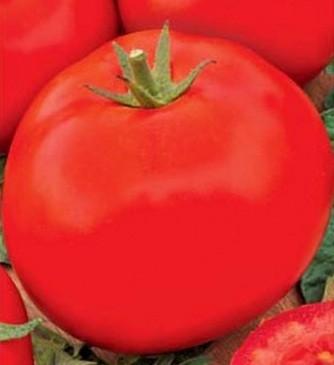 foto-sorta-tomata-aida