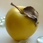 Описание сорта яблони Казанищенское