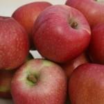 Описание сорта яблони Киддс оранж ред