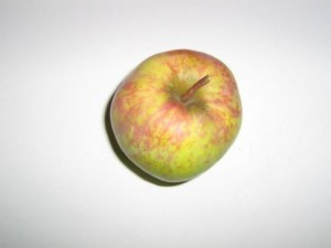 яблоня кутузовец описание фото