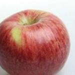 Описание сорта яблони Ломоносовское