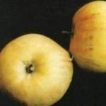 Описание сорта яблони Надежда (Таганай)