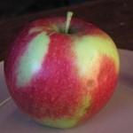 Описание сорта яблони Россошанское багряное