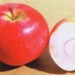 Описание сорта яблони Солнцедар