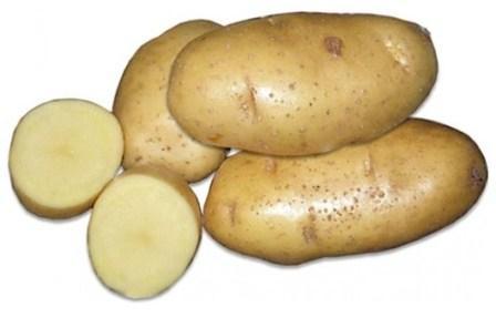 sort-kartofelya-bryanskij-yubilejnyj