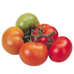 foto-sorta-tomata-pomidora-abigajl