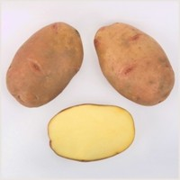 sort-kartofelya-vektar-belorusskij