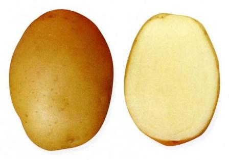 foto-sorta-kartofelya-krepysh