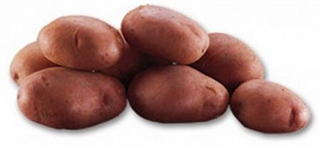 foto-sorta-kartofelya-ledi-rozetta