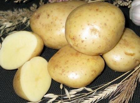 foto-sorta-kartofelya-nyuton
