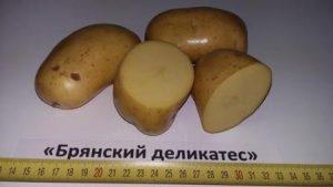 foto-sorta-kartofelya-bryanskij-delikates